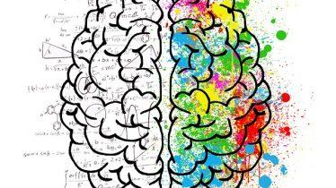 brain 2062057_640